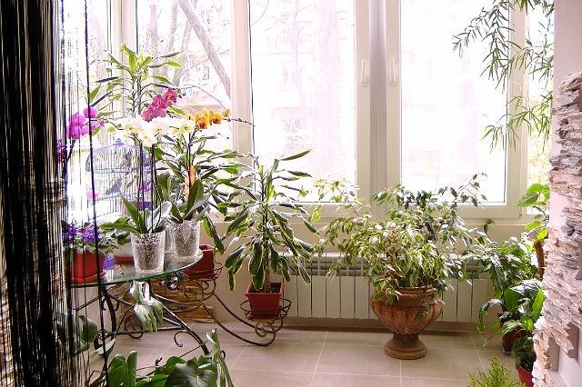 К комнатные цветы для дома